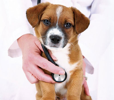 puppy getting a vet checkup