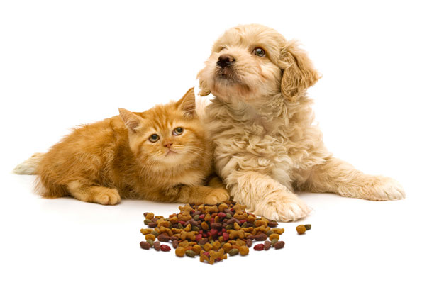 orange kitten with spaniel puppy and pet kibble