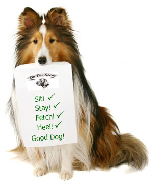 border collie holding list of commands